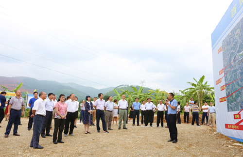 市政协到平班镇岩来斯西贡蕉种植核心示范区考察
